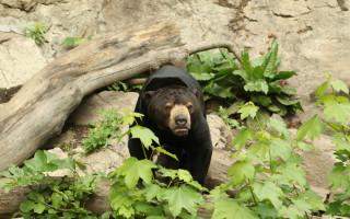 Nové prolézačky pro medvědy malajské