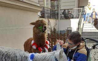 Zvířátka patří na Dvoreček – pomozte nám udržet zvířátka doma (u Adélky)