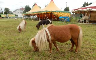 Podpořme českou tradici – podpořme Cirkus Jo-Joo