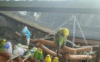 Azylový domov pro andulky