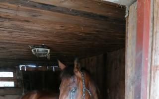 Pomoc pro koně u Lužáku
