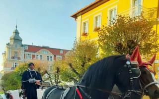 Pomohli jste zachránit koně z Mariánských Lázní