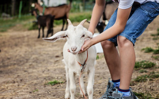 Pomozme zachránit Kozí farmu Vizovice