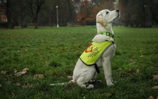 Pomáhejme o Vánocích: JEDEN ROK PRO KIWI – Vodicí pes, z.s.