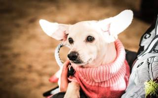Za podporu psího hospice let balonem - Za dobu existence hospice se u Elišky vystřídali stovky psů. Ze zubožených stvoření, která se jí dostanou do ruky se můžou vyklubat i takto nádherní manekýní:-)