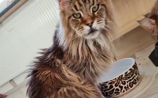 Pomoc pro Radunku, aby mohla prožít šťastný kočičí život