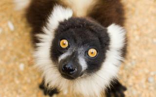 Pro plné misky zvířátkům v Zooparku Zájezd