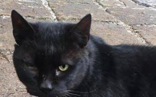Podpořme společně kočičí depozitum Světluška - pro kočky, z.s.