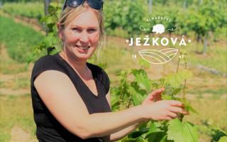 Pomoc vinařství Miroslavy Ježkové, které zničilo tornádo