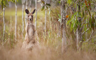 Jedinečný zážitek s Cirk La Putyka za pomoc Australii