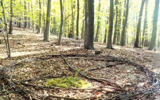 Svobodu lesu