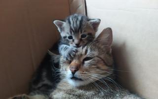 Pomozte vybavit dočasné péče pro březí kočičky a koťátka