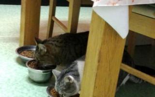 Pomozte starým a hendikepovaným kočičkám ze Svitav