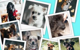 Za podporu psího hospice let balonem - Dejte nám šanci z.s. 9.1.2020 - po sérii odchodů za Duhový most, která nás na sklonku roku minulého postihla a hodně ochromila, především emocionálně, se nám dostalo alespoň malé sati