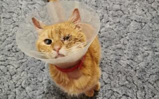 Složili jste se na bezpečný a krásný život zachráněných kočiček