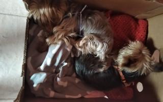 Ošetření zoubků pro Maxíka a Foxíka