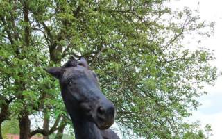 Pomozme zajistit nevidomé kobylce Kačence dlouhý a spokojený život