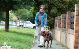 Za léčbu vodícího psa Xanta setkání s Jakubem Kohákem - Pro Renatu je Xanto nejlepším přítelem, ale i očima