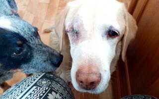 Přispějme na rekonstrukci psího hospice Adélka