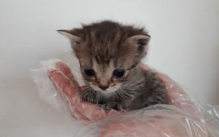 Přispějte na veterinární péči pro opuštěná zvířátka