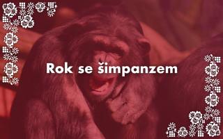 Podpořte zvířata ze Zoo Hodonín