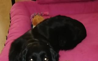 Canisterapeutický psí parťák Kiwi pro Aničku