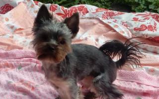 Pomoc pro Dixinku, aby mohla běhat bez bolesti
