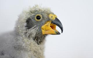 Podpořte nestora kea, který se narodil v Zoo Praha