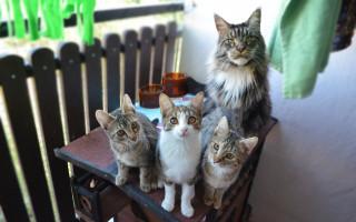 Kvalitní prostory pro pomoc nejen kočičkám