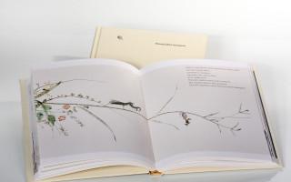Podpořme knihu pro malé i velké: O čem sní mravenec