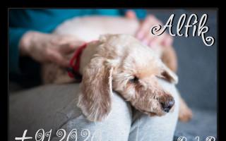 Za podporu psího hospice let balonem - Eliška umožňuje týraným a nemocným pejskům důstojné a láskyplné odcházení