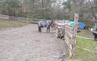 Bezpečné povrchy pro staré a nemocné koně