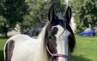 Pomozte společně s Karolínou Krézlovou Salse a vyražte s ní na koně!