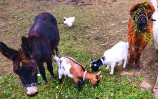 Zooterapie všude, kde je potřeba