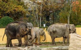 Pomoc pro zvířata v Zoo Ostrava