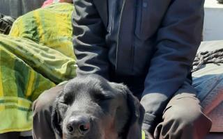 Veterinární péče pro Bena, který nemá svůj domov