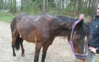 Pomohli jste opuštěným a týraným koním