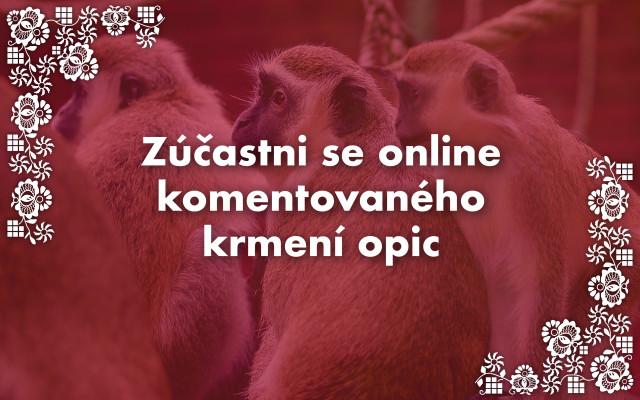 Zúčastni se online komentovaného krmení opic