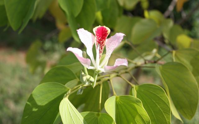 Semena afrických plodin