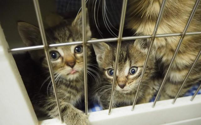 Šance na život pro opuštěné kočičky
