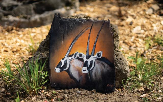 Kousek zoo v obýváku - Oryxové