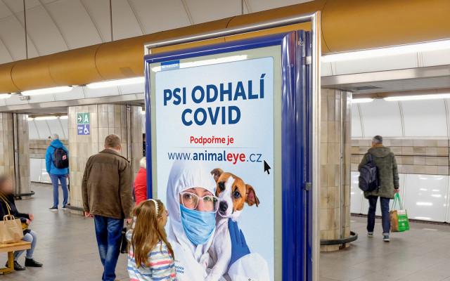 Podpořme výcvik psů k detekci COVID-19 a dalších onemocnění