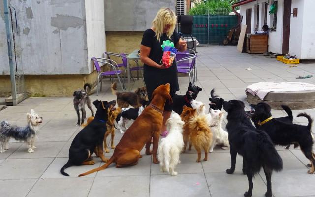 Domov pro psí seniory
