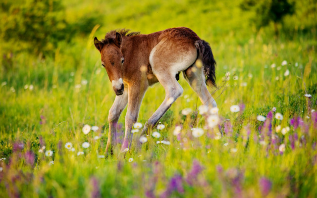 Záchrana divokých koní a dokončení rezervace v Milovicích