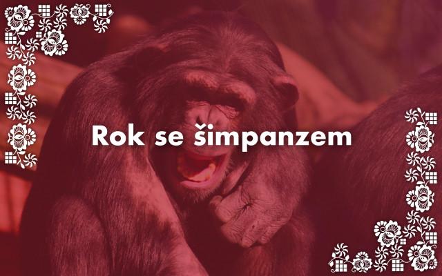 Rok se šimpanzem