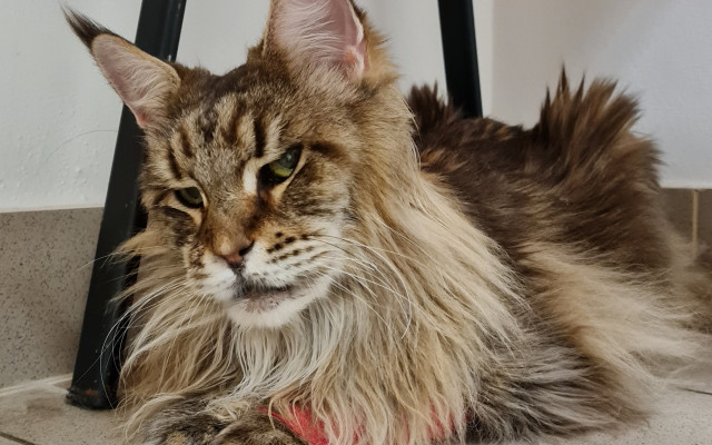Pomohli jste Radunce, aby mohla prožít šťastný kočičí život