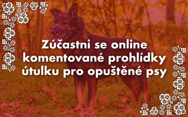 Zúčastni se online komentované prohlídky útulku pro opuštěné psy