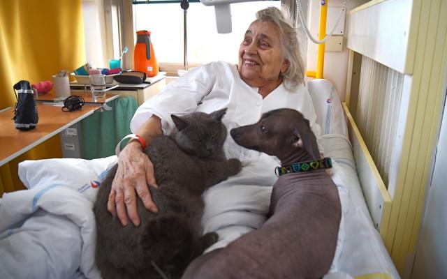 #ÚsměvZdravotníkům aneb zvířecí psychoterapeuti do nemocnice