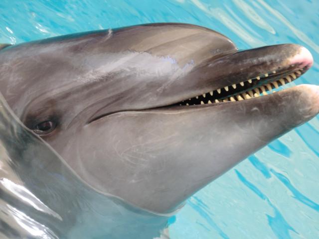 Delfinoterapie pro Daníka s DMO