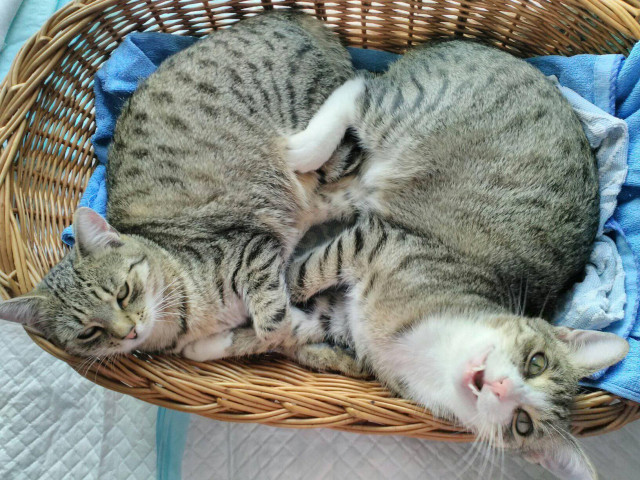 Podpořili jste kočičí depozitum Světluška - pro kočky, z.s.